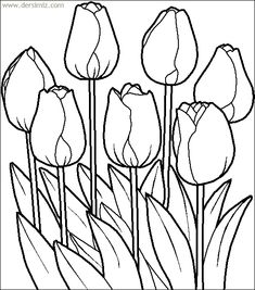 lovely tulip flower printable coloring page online