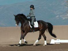 Dimaggio | Dressage Horses For Sale | DressageMarket.com