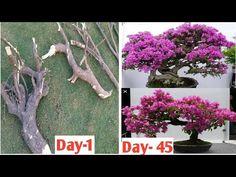 Bonsai Soil, Bonsai Plants, Bonsai Garden, Bonsai Tree Care, Bonsai Art, Potted Plants Patio, Garden Plants, Lawn And Garden, Garden Art