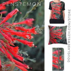 Get these Penstemon products and more from http://ift.tt/1hfrEWq #home #technology #clothing #arts #crafts #nature #flowers #garden #products