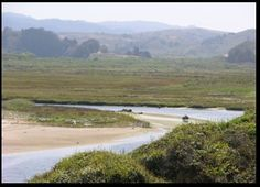 The 243-acre Pescadero Marsh Natural Preserve, a part of Pescadero State Beach, includes the only extensive wetland along the coast of the San Francisco peninsula. The preserve includes a complex of several habitats—a tidal estuary, freshwater marsh, brackish water marsh, dense riparian woods, and northern coastal scrub. It is an important wintering ground for waterfowl on the Pacific flyway.