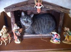 25 Cats That Wanted To Be The Center Of Attention So they Took Over Nativity Scenes