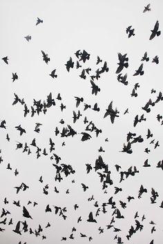 free birds..