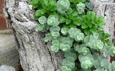 deko ideen selbermachen baumstumpf pflanzen kreative gartenideen
