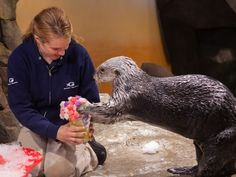 "A southern sea otter delightfully grabbing an edible bouquet | ""These Otters Celebrating Valentine's Day Will Make Your Heart Smile"" via Buzzfeed"