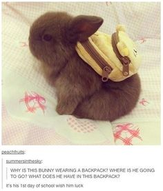 bunny in a backpack