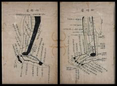Free Clip Art and Digital Collage Sheet - Chinese Acupuncture Medical Drawings, Body Chart, Acupuncture Points, Kyushu, Traditional Chinese Medicine, Tai Chi, Digital Collage, Collage Sheet, China