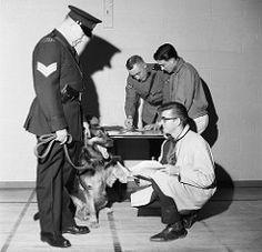 1960 calgary alberta police dog