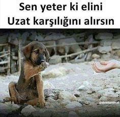 Zulu, Dogs, Quotes, Animals, Allah, Photography, Quotations, Animales, Photograph