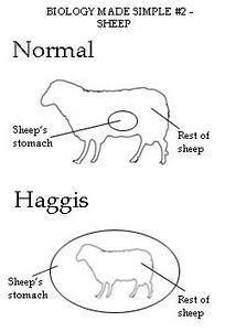 Haggis Anatomy Robbie Burns Night, Irish Memes, Scotland Culture, Scottish Mountains, Robert Burns, Interesting History, My Heritage, Dear God, I Fall In Love