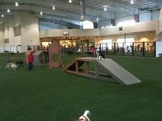 Home Despairs: Dallas Indoor Dog Park – Dog kennel indoor Dog Kennel Cover, Diy Dog Kennel, Kennel Ideas, Dog Kennels, Agility Training For Dogs, Dog Agility, Indoor Dog Park, Dog Kennel Designs, Indoor Play Areas