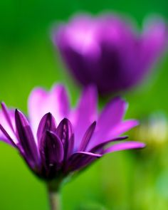 following-thesun:    purple and green (by StephenCairns(on extended break))    This aloneness is worth more than a thousand lives.This freedom is worth more than all the lands on earth.To be one with the truth for just a moment,Is worth more than the world and life itself._RUMI