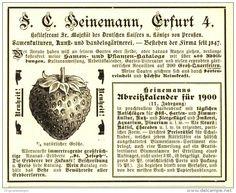 Original-Werbung/ Anzeige 1899 - ERDBEEREN / HEINEMANN ERFURT - ca. 110 x 80 mm