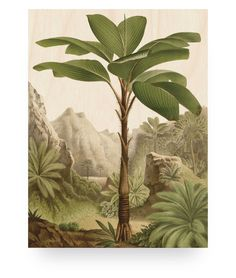 Wood print banana tree large