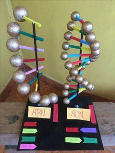 Maquetas ADN