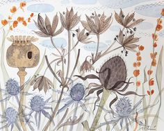 Meadow with Poppy and Astrantia - watercolour drawing by Angie Lewin Watercolor Drawing, Watercolor Paintings, Watercolours, Water Drawing, Watercolor Plants, Botanical Illustration, Illustration Art, Illustrations, Angie Lewin