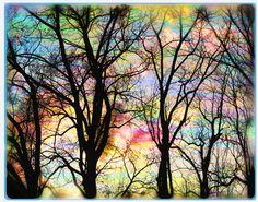 Cotton candy sunrise, art, photography, nature, 11x14, Original, tree art, landscape,  Home Decor, Nature Decor, woodland, trees, sunrise on Etsy, $55.00