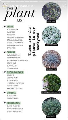 Australian Garden Design, Australian Native Garden, Landscaping Supplies, Backyard Landscaping, Garden Edging, Garden Beds, Back Gardens, Outdoor Gardens, Modern Gardens