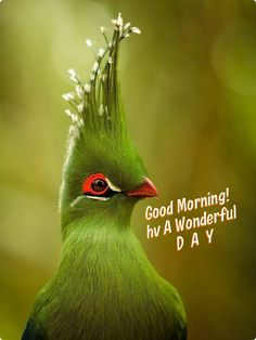 Good Morning Beautiful Birds Hd Images Imaganationfaceorg