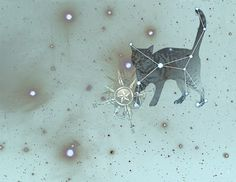 Felis Major #constellation