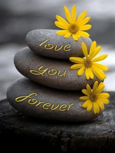 Color splash of yellow ~ love you forever. Color Splash, Color Pop, Colour Yellow, Arte Floral, Love You Forever, In Loving Memory, Mellow Yellow, Grey Yellow, Pebble Art