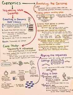 Intro to Genomics