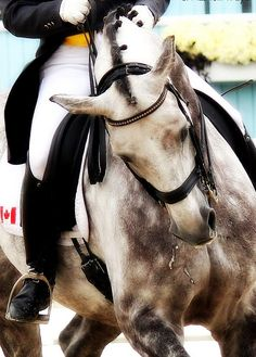 love the coloring #dressage