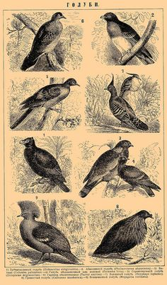 From the Brockhaus and Efron Encyclopedic Dictionary, via Flickr.