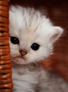 Extremely Cute Kitten - Click to see loads of great pictures of cats and kittens to brighten your day.