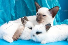 Cat and rabbits by TalyaPhoto on @creativemarket