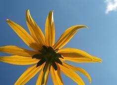 Rayons de soleil sur pétales de douceurs