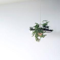 Висячие сады Райана Тейлора   HomeNiNo.ru — портал о дизайне интерьера