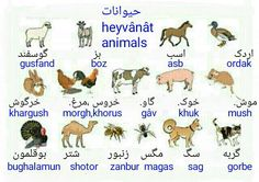 Animals in Farsi Persian Language, Arabic Language, Farsi Alphabet, Dari Language, Learn Farsi, Learn Persian, Increase Knowledge, Persian Quotes, Persian Culture