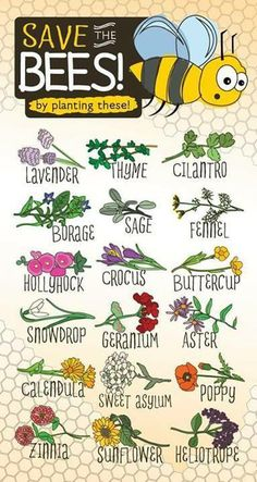 Make sure to plant these in your gardens! The Bees need you!