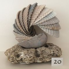 Cockle Shell Sculpture on Sea Stone Base  by WhitemarshShellArt