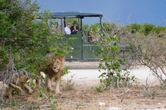 Villa Mushara | Signature African Safaris Largest Countries, African Safari, National Parks, Villa, Landscape, Gallery, Animals, Game, Animales