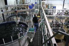 From Vietnam Aquaculture Network