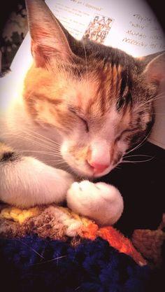 Happy Cat Week!!!