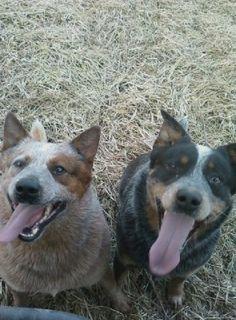 Teddy & Dio