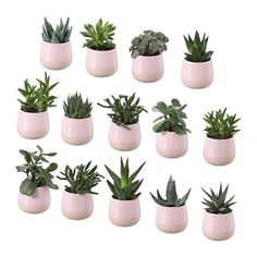 IKEA - SUCCULENT, Plant with pot $7.99 each