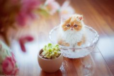 Beautiful cat images Beautiful Cat Images, Most Beautiful, Cats, Gatos, Kitty Cats, Cat, Kitty, Serval Cats, Kittens