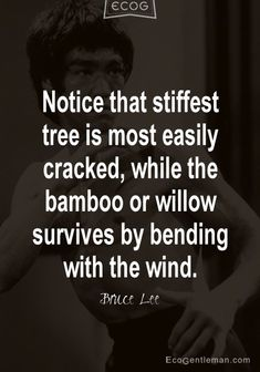Martial Art Quotes by Bruce Lee ♂ Notice that stiffest tree is most easily cracked while the bamboo or willow survives by bending with the wind.