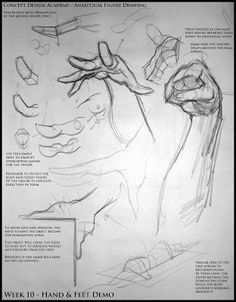 Analytical Figure Drawing SP08: Week 10 - Hand & Feet Notes http://analyticalfiguresp08.blogspot.com/2008/04/week-8-leg-knee-structure-demo.html