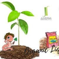 Make Organic Liquid Fertilizer For Your Garden & Vegetables Organic Liquid Fertilizer, Vegetable Garden, Christmas Ornaments, Vegetables, Holiday Decor, Amp, Vegetables Garden, Christmas Jewelry, Vegetable Recipes