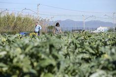 La renta agraria valenciana se mantiene en torno a 1.900 millones, por encima de la media de la última década