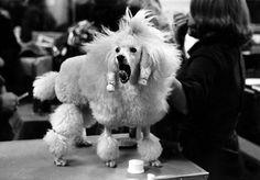 Elliott Erwitt, Dogs