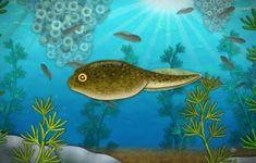 [어린이 자연관찰] 올챙이 성장과정과 개구리의 특징에 대해 알아보자(+영상) : 네이버 블로그 Fish, Pets, Animals, Animales, Animaux, Pisces, Animal, Animais, Animals And Pets