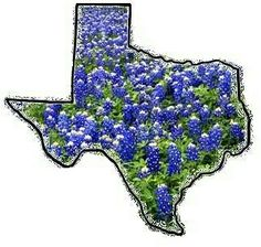 Bluebonnets - State Flower of Texas