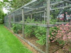 cage around blueberry bushes to thwart the birds