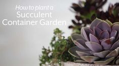 How To Plant Succulents in Containers | Southern Living